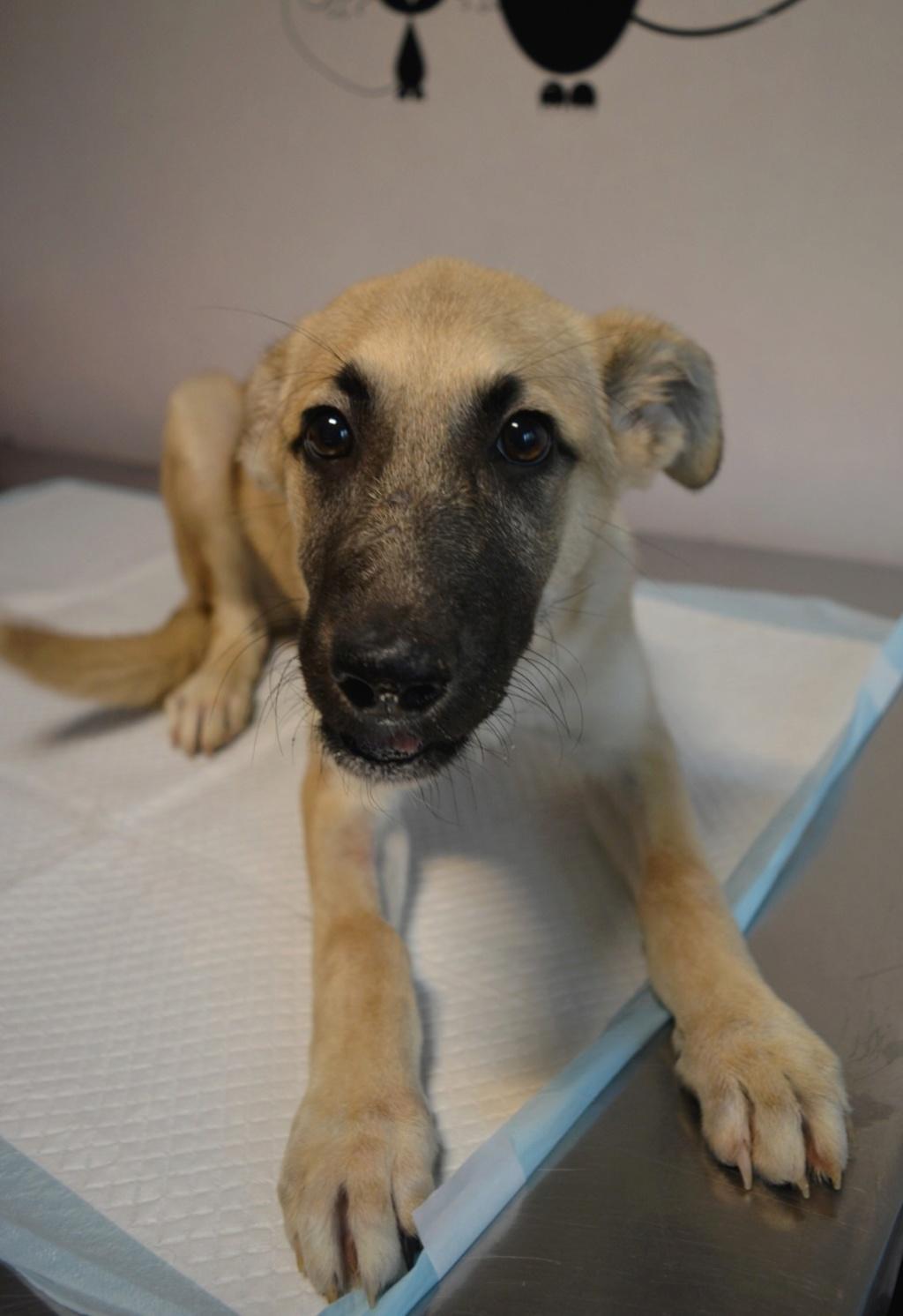 Rianna- femelle- fourrière de Târgu Frumos - sera en famille d'accueil dans le 67 en octobre Ria_410