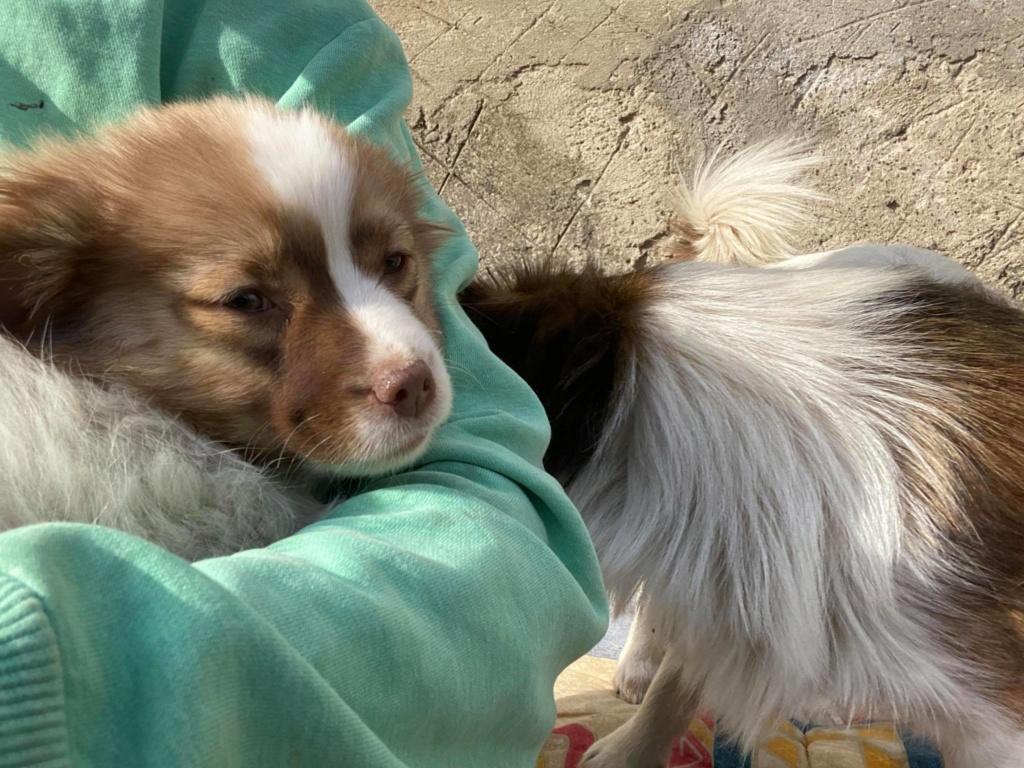 Rocky- mâle- fourrière de Târgu Frumos Rocky_12