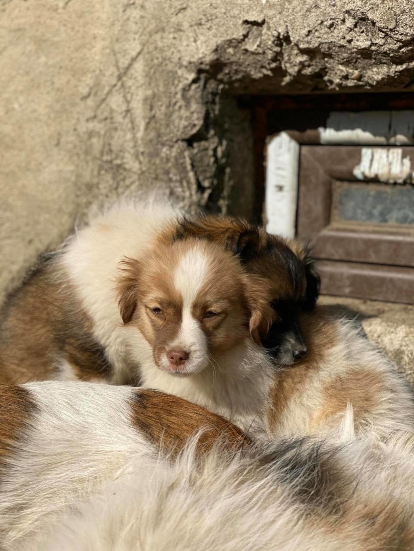 Rocky- mâle- fourrière de Târgu Frumos Rocky_16