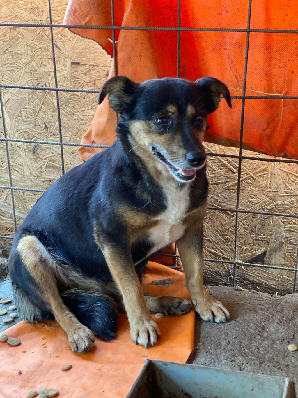 Rosea- femelle- fourrière de Târgu Frumos - adoptée via Andreea Rosea_15