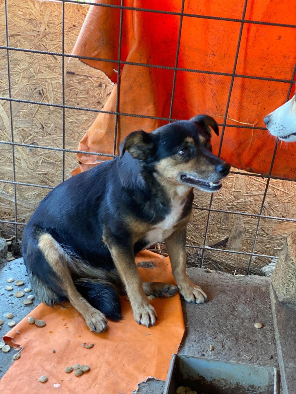 Rosea- femelle- fourrière de Târgu Frumos - adoptée via Andreea Rosea_16