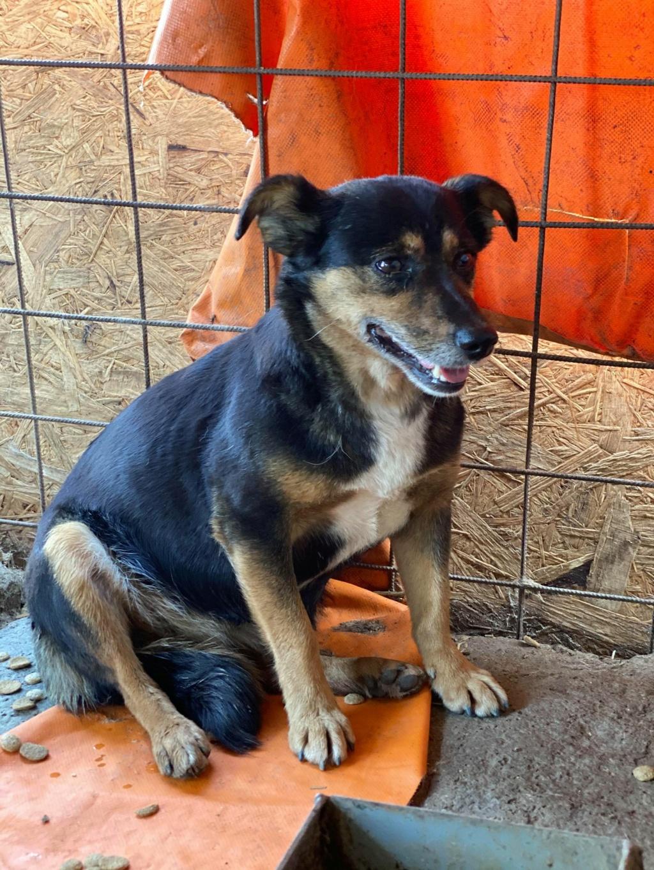 Rosea- femelle- fourrière de Târgu Frumos - adoptée via Andreea Rosea_17