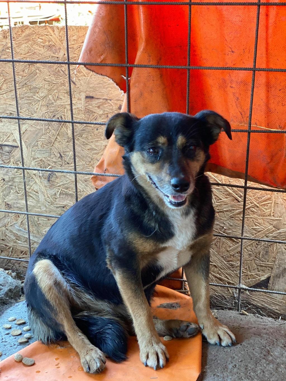 Rosea- femelle- fourrière de Târgu Frumos - adoptée via Andreea Rosea_18