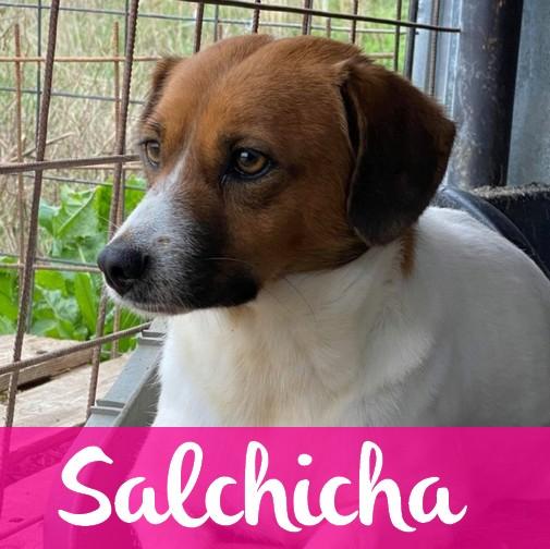 SalchichaF