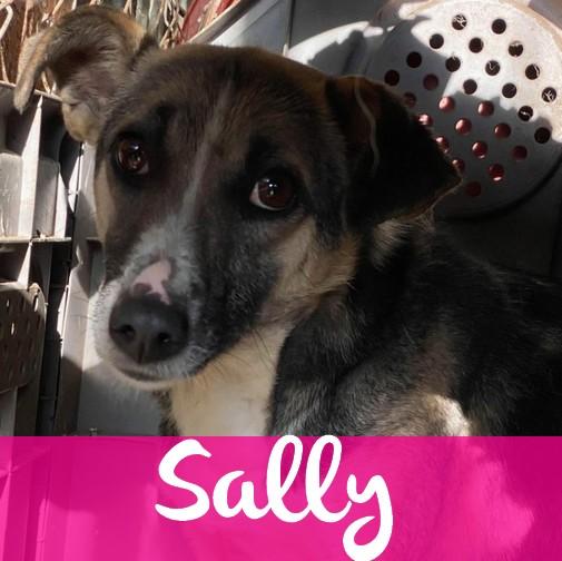 SallyF