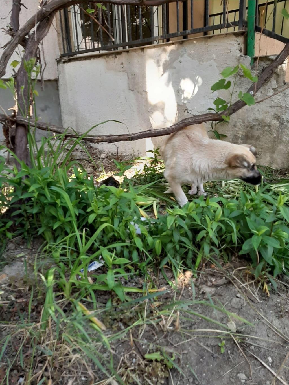 Salomé-femelle- fourrière de Târgu Frumos - reservée 67 Salomz23