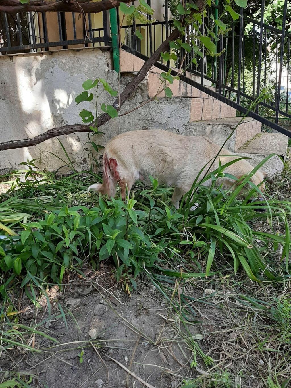 Salomé-femelle- fourrière de Târgu Frumos - reservée 67 Salomz28