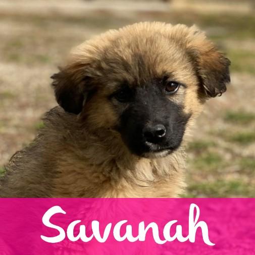 savanahF