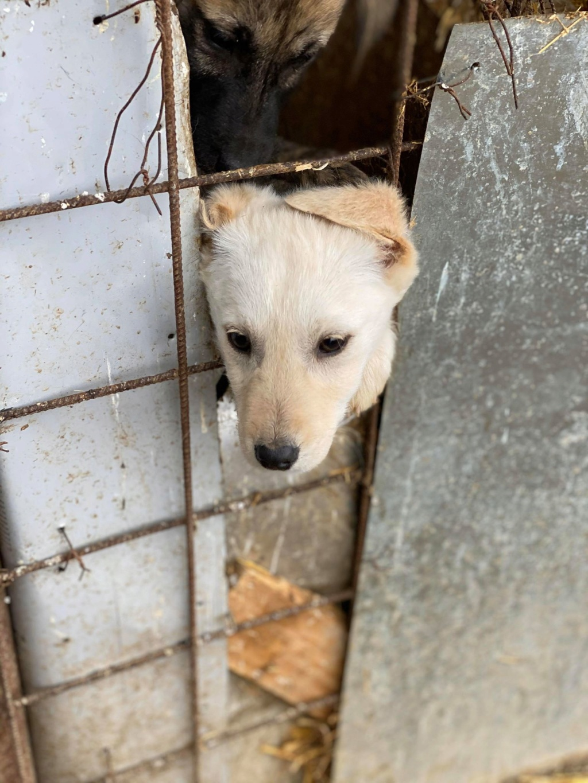 Sayana- femelle- fourrière de Târgu Frumos - adoptée via Andreea Sayana15
