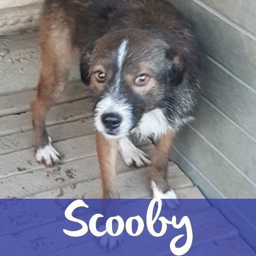 ScoobyM
