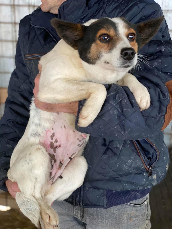 Selma- femelle- fourrière de Târgu Frumos - adoptée via Andreea Selma_15