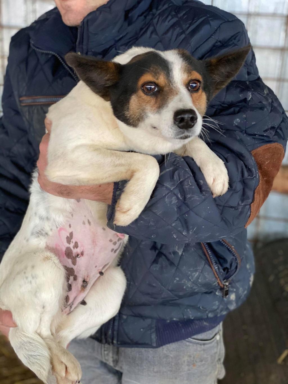 Selma- femelle- fourrière de Târgu Frumos - adoptée via Andreea Selma_16