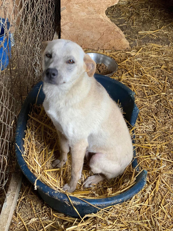 Serenity-  femelle-fourrière de Târgu Frumos -  en famille d'accueil dans le 78  Sereni24