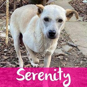 SerenityF