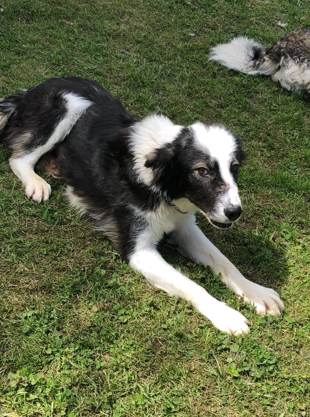 Everest - chienne femelle - fourrière de Târgu Frumos - en famille d'accueil dans le 67 Sf10