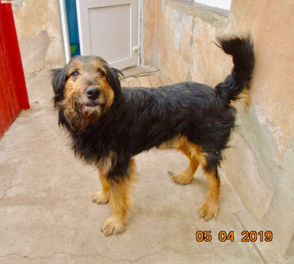 Mr Shaggy-mâle- refuge d'Arad - adopté via Arad Shaggy12