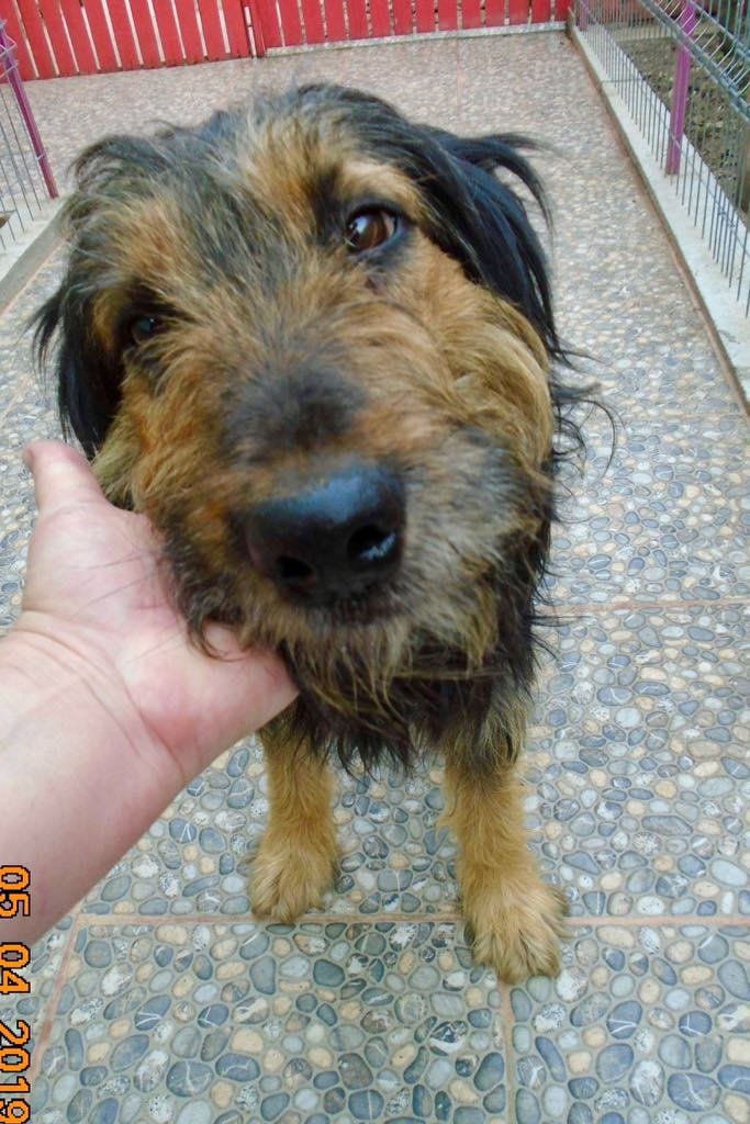 Mr Shaggy-mâle- refuge d'Arad - adopté via Arad Shaggy14