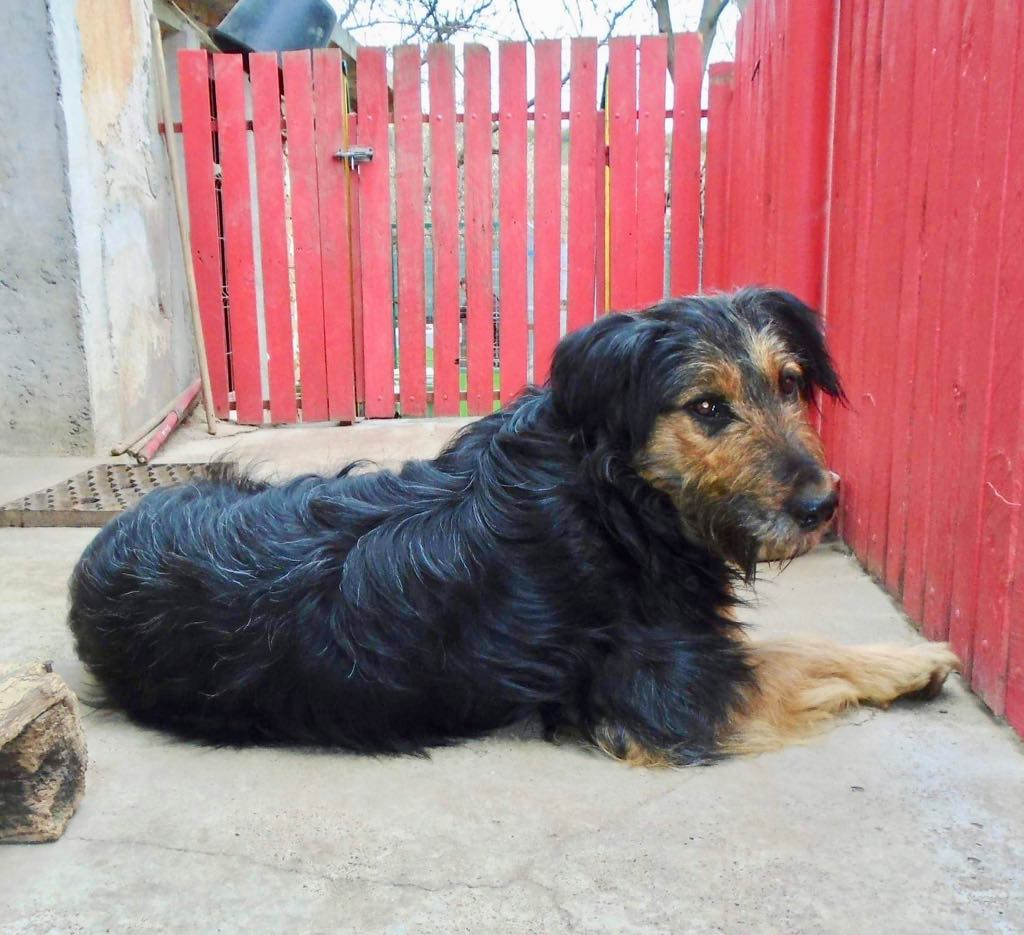 Mr Shaggy-mâle- refuge d'Arad - adopté via Arad Shaggy15