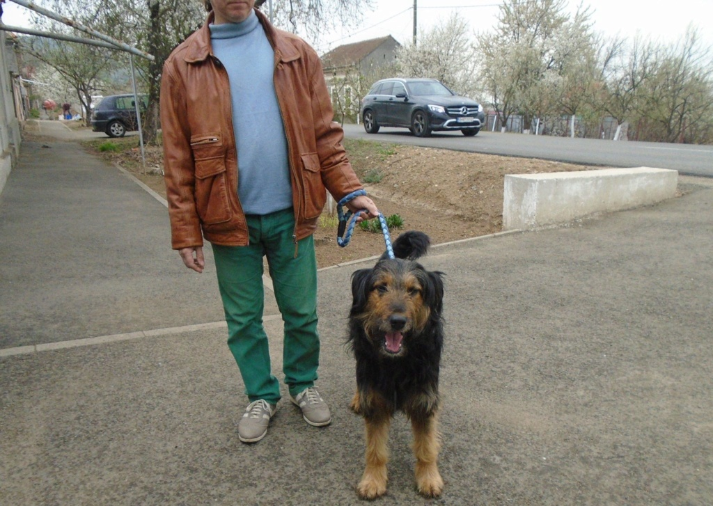 Mr Shaggy-mâle- refuge d'Arad - adopté via Arad Shaggy27