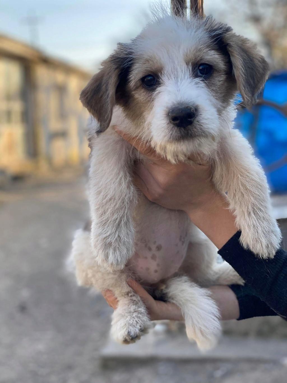 Skully -femelle- fourrière de Târgu Frumos - adoptée via Andreea Skully11