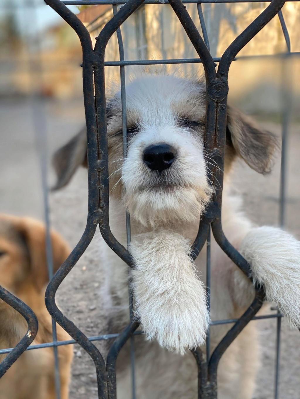 Skully -femelle- fourrière de Târgu Frumos - adoptée via Andreea Skully13