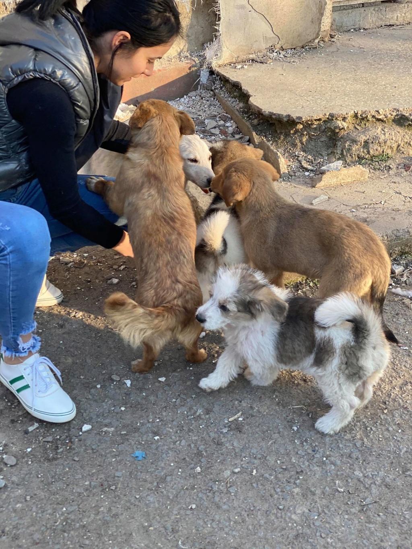 Skully -femelle- fourrière de Târgu Frumos - adoptée via Andreea Skully16