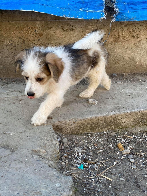 Skully -femelle- fourrière de Târgu Frumos - adoptée via Andreea Skully17