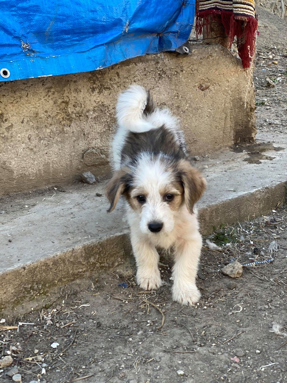 Skully -femelle- fourrière de Târgu Frumos - adoptée via Andreea Skully18