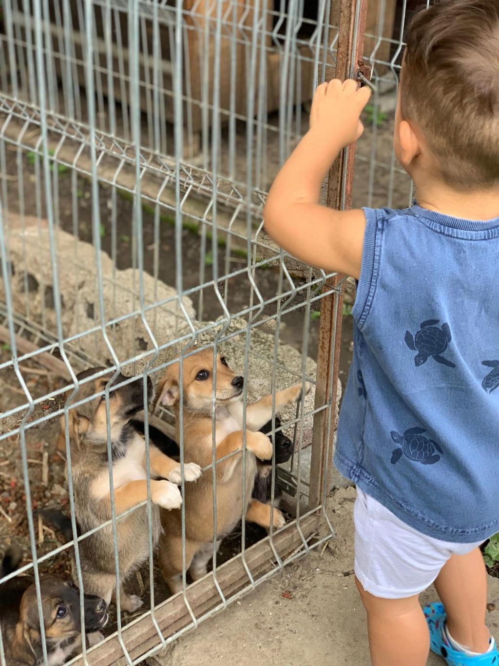 Sora- femelle- fourrière de Târgu Frumos - adoptée en Hollande Sora_112