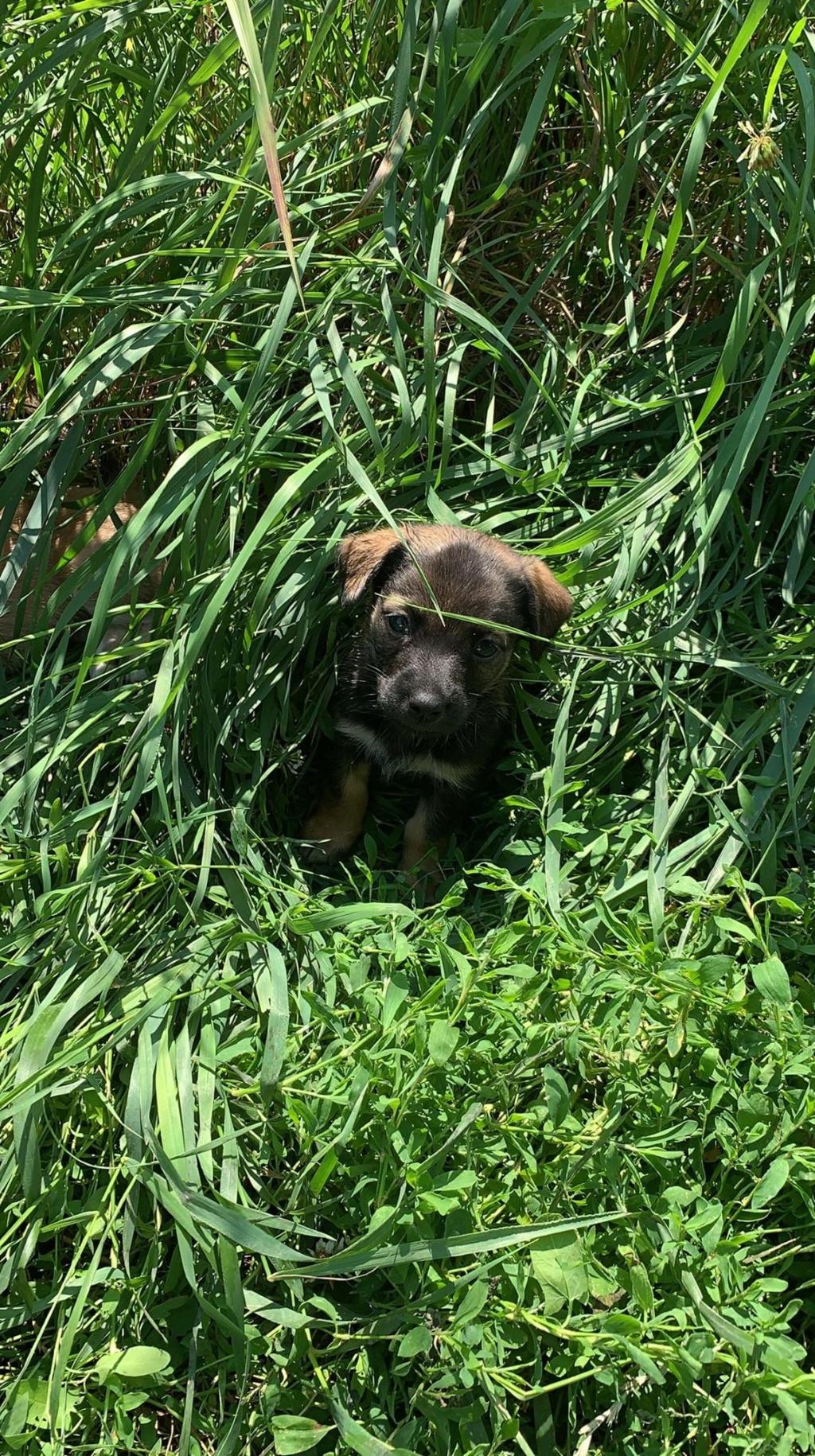 Yuki (ex Cerise) - femelle- fourrière de Târgu Frumos - réservée adoption (67) Sora_322