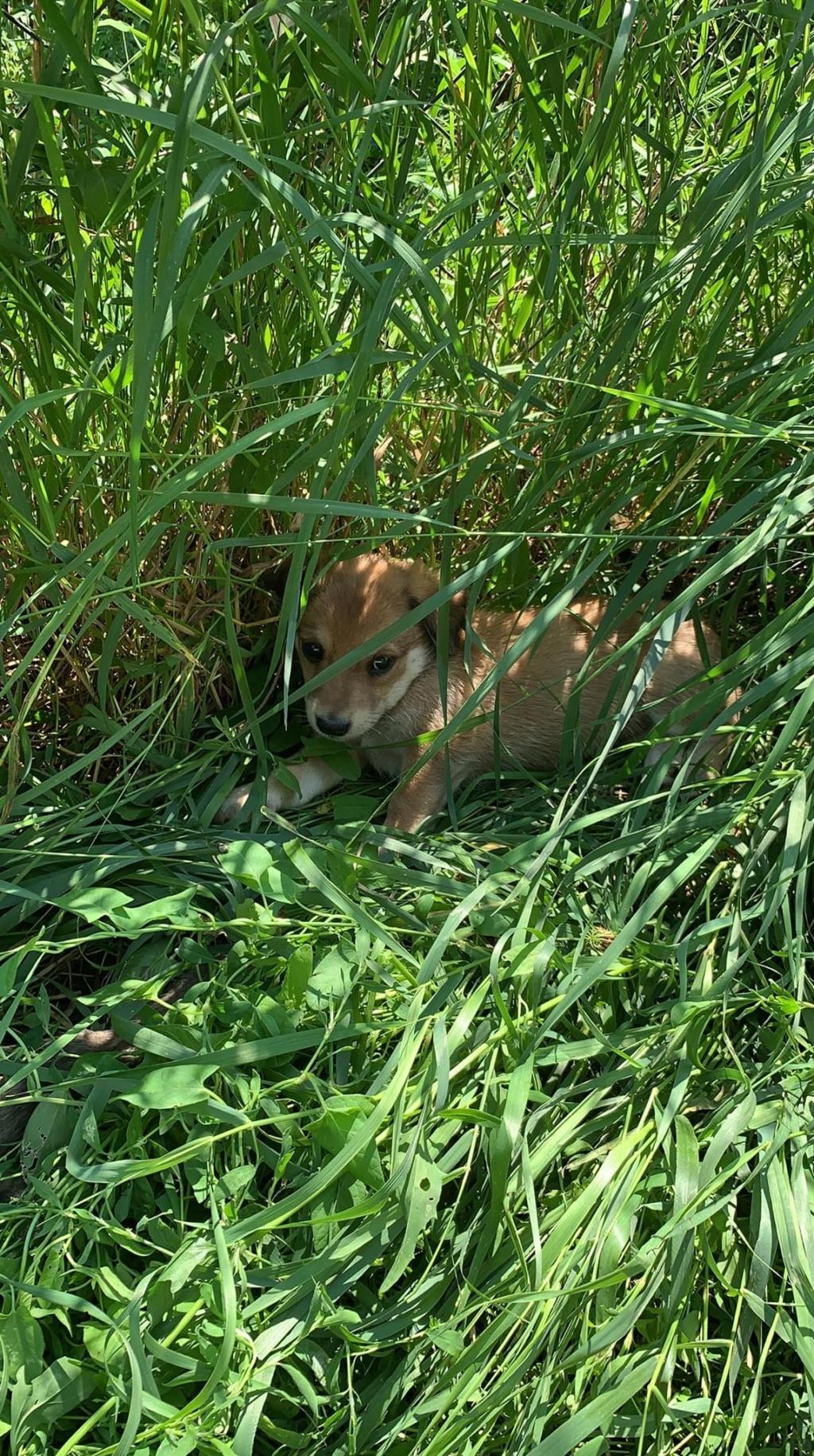 Sora- femelle- fourrière de Târgu Frumos - adoptée en Hollande Sora_332