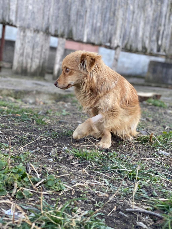 Spritz-mâle- fourrière de Târgu Frumos - adopté via Andreea Spritz10