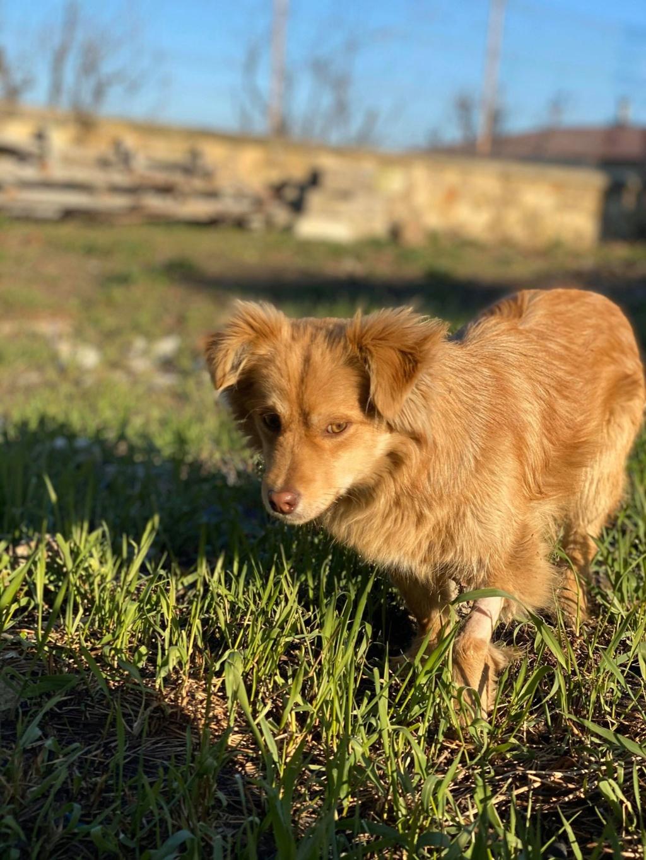 Spritz-mâle- fourrière de Târgu Frumos - adopté via Andreea Spritz11