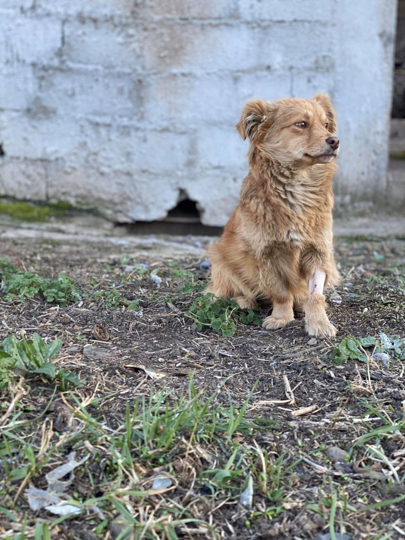 Spritz-mâle- fourrière de Târgu Frumos - adopté via Andreea Spritz12