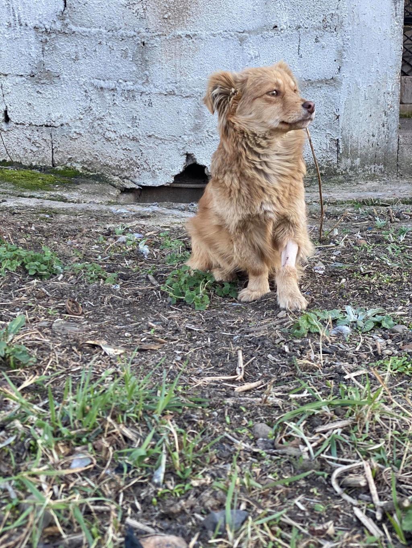 Spritz-mâle- fourrière de Târgu Frumos - adopté via Andreea Spritz13