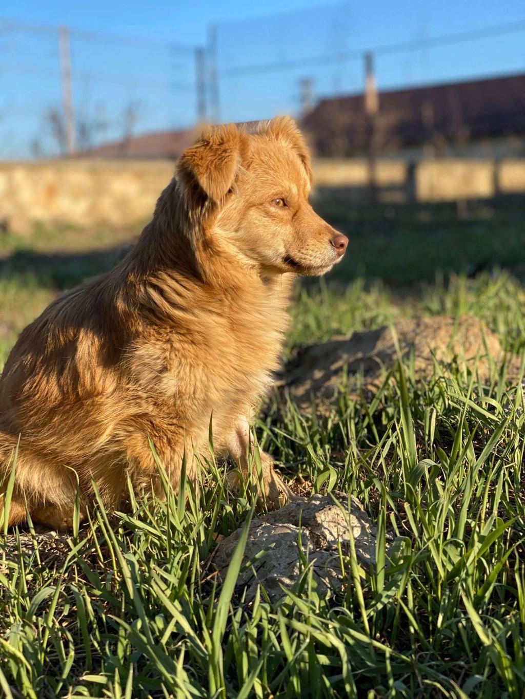 Spritz-mâle- fourrière de Târgu Frumos - adopté via Andreea Spritz14