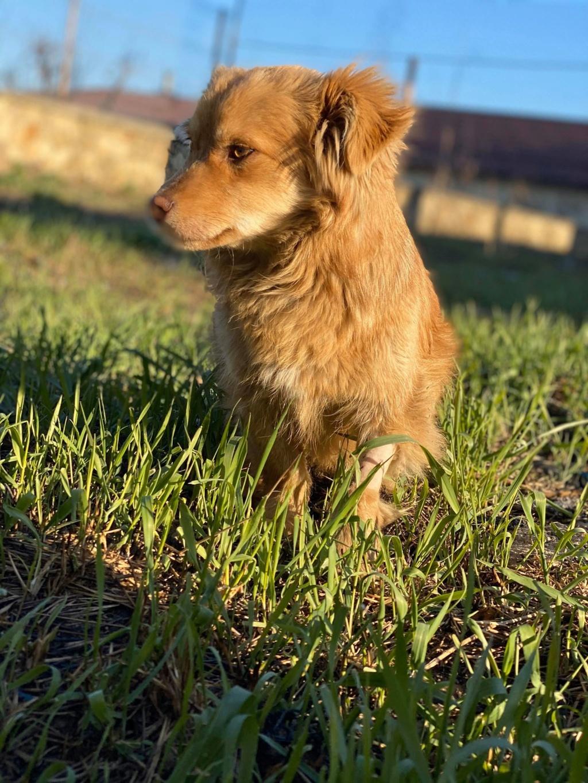 Spritz-mâle- fourrière de Târgu Frumos - adopté via Andreea Spritz16