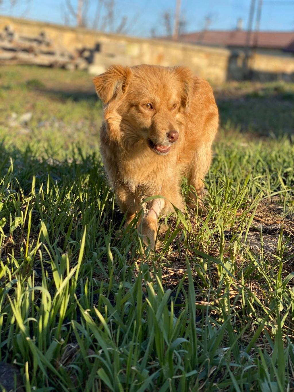 Spritz-mâle- fourrière de Târgu Frumos - adopté via Andreea Spritz17