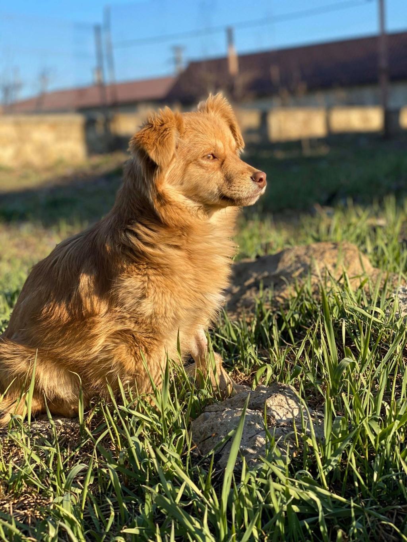 Spritz-mâle- fourrière de Târgu Frumos - adopté via Andreea Spritz18