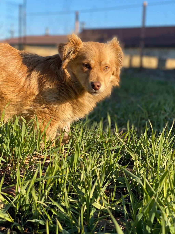 Spritz-mâle- fourrière de Târgu Frumos - adopté via Andreea Spritz19