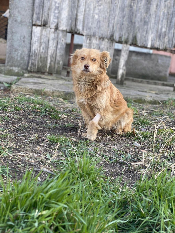 Spritz-mâle- fourrière de Târgu Frumos - adopté via Andreea Spritz20
