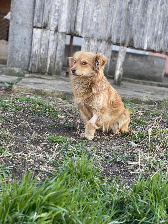 Spritz-mâle- fourrière de Târgu Frumos - adopté via Andreea Spritz21