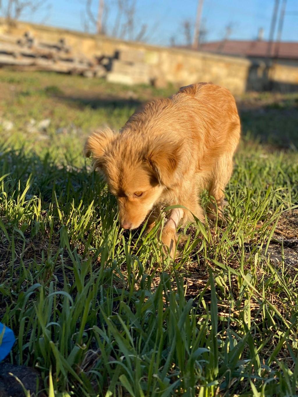 Spritz-mâle- fourrière de Târgu Frumos - adopté via Andreea Spritz22