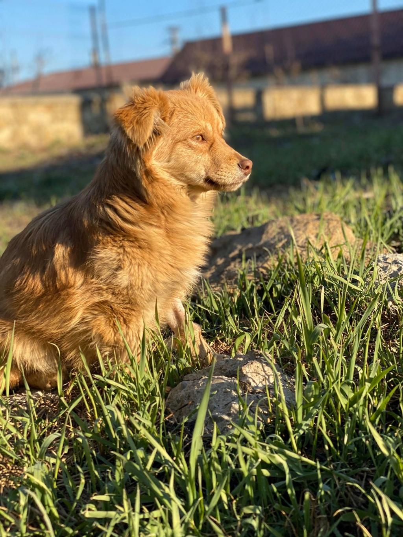 Spritz-mâle- fourrière de Târgu Frumos - adopté via Andreea Spritz23