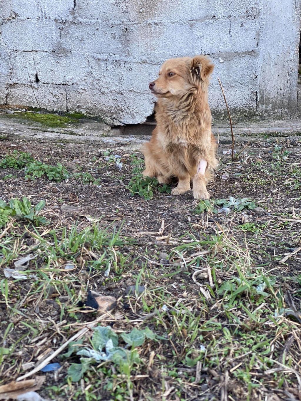 Spritz-mâle- fourrière de Târgu Frumos - adopté via Andreea Spritz26