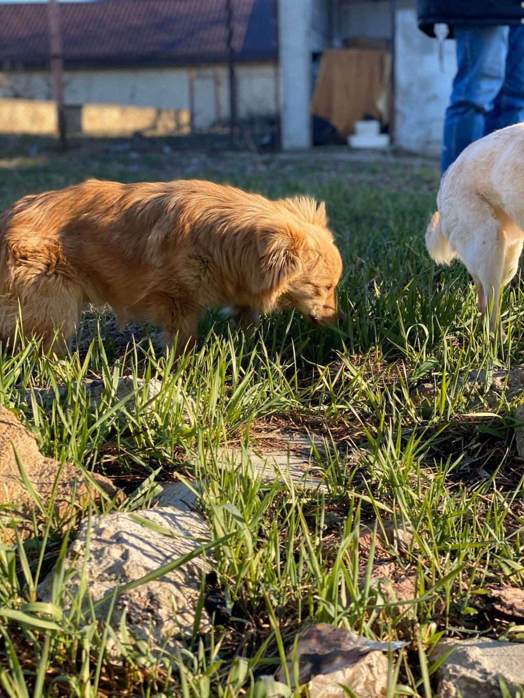 Spritz-mâle- fourrière de Târgu Frumos - adopté via Andreea Spritz27