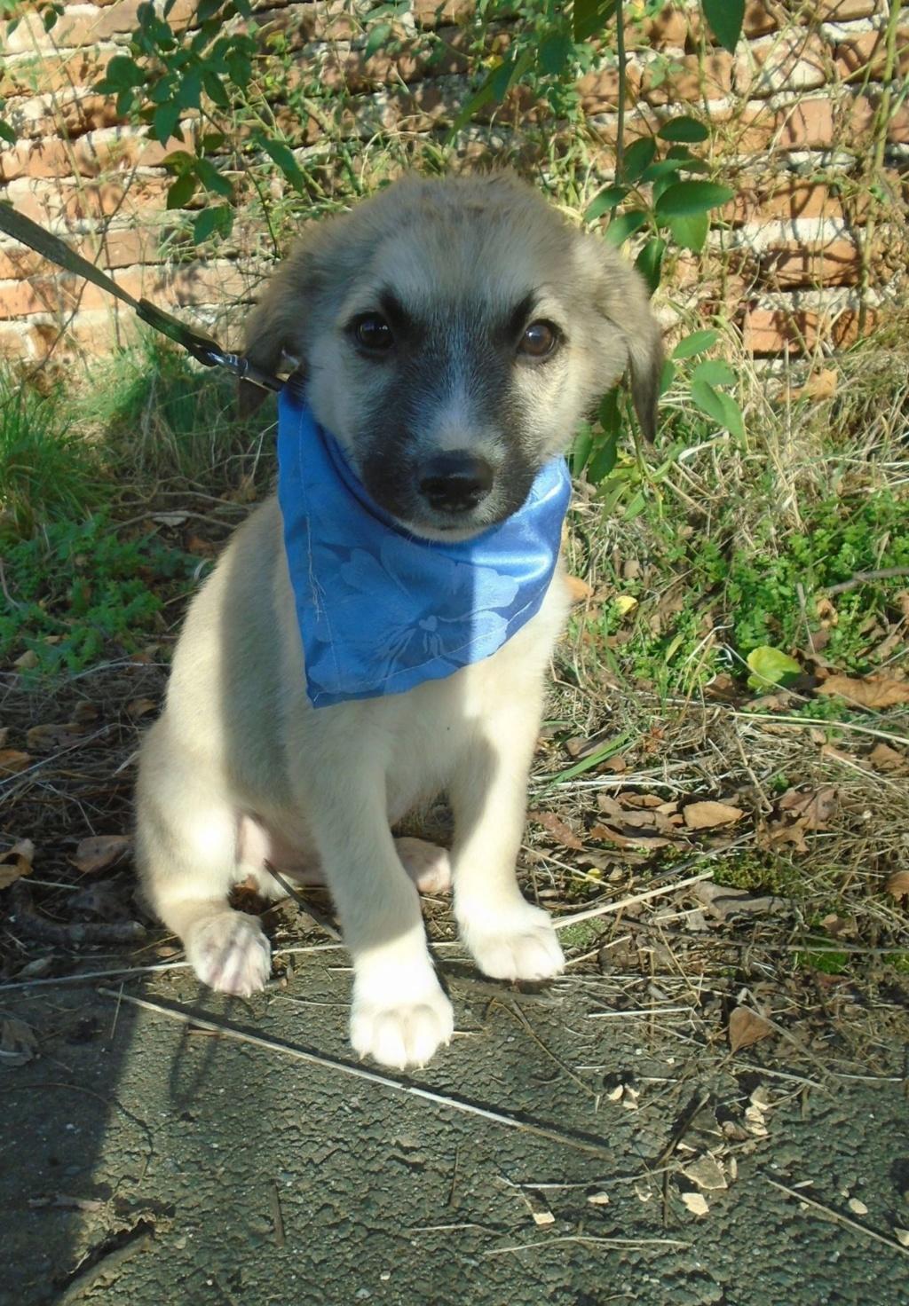 Hutch-mâle- refuge d'Arad - Réservé adoption (68) Starsk14