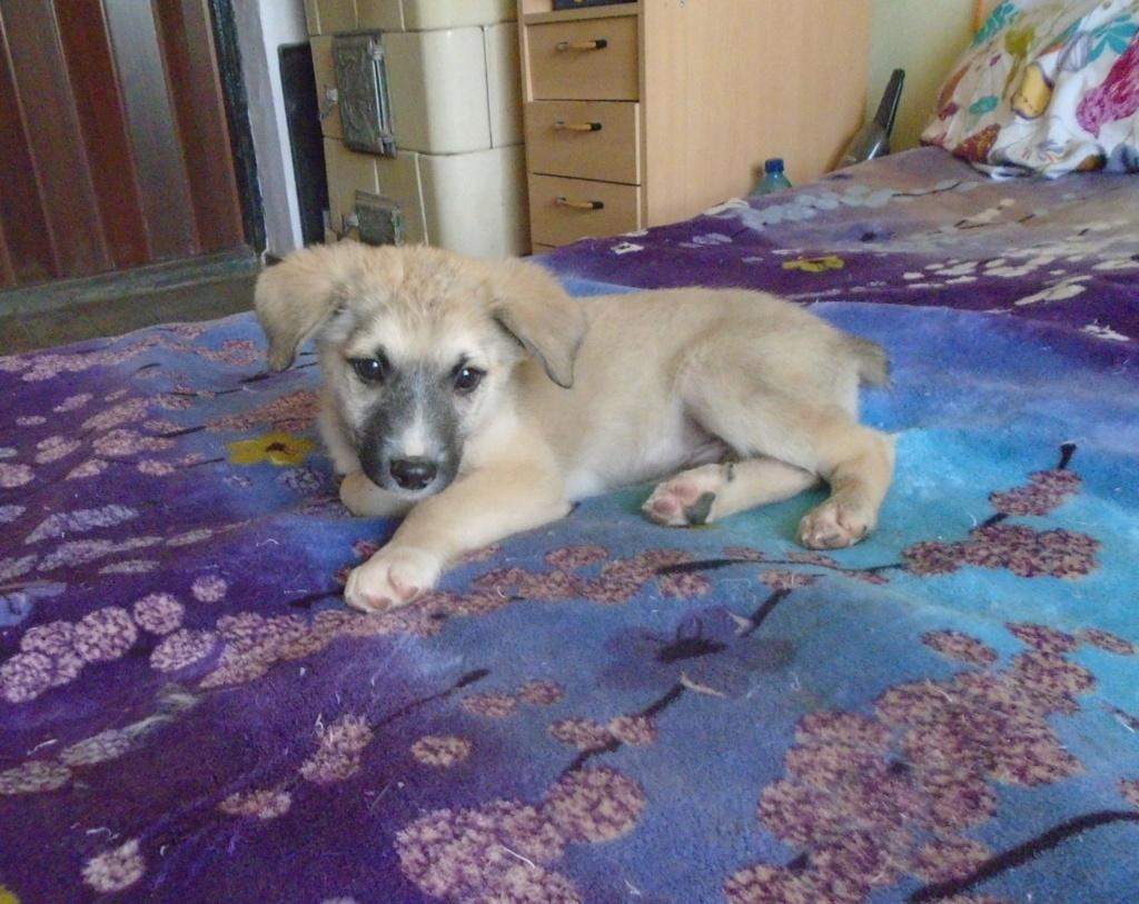 Hutch-mâle- refuge d'Arad - Réservé adoption (68) Starsk19
