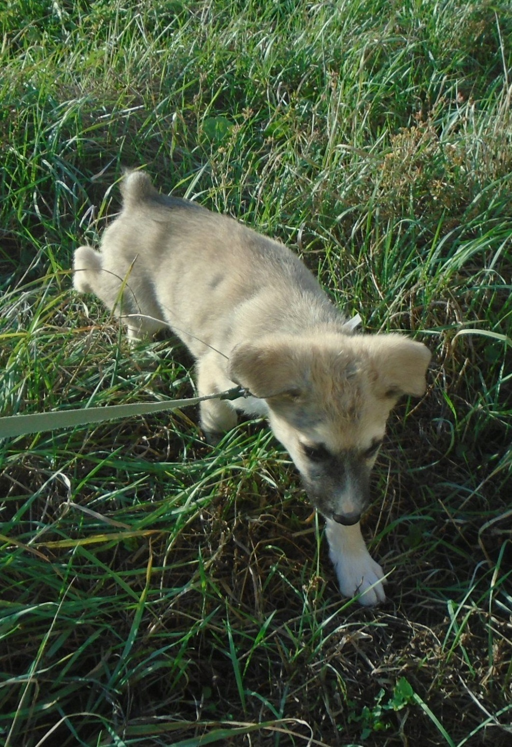 Hutch-mâle- refuge d'Arad - Réservé adoption (68) Starsk27