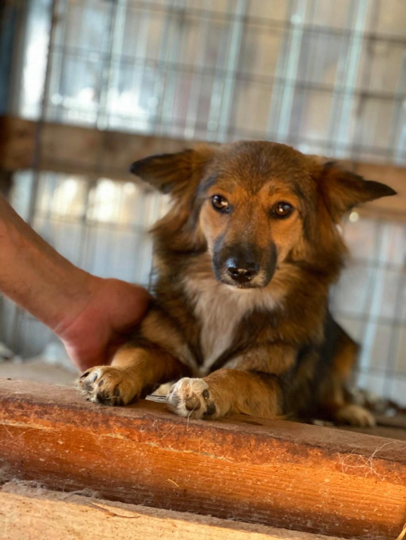 Lili (ex-Stella) - femelle - fourrière de Târgu Frumos - réservée adoptions (68) Stella11